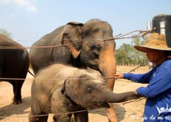 Visita a Wildlife Friends Foundation Thailand