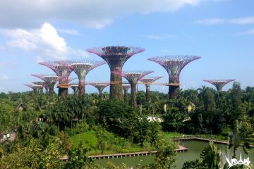gardens-by-the-bay-singapur (4)