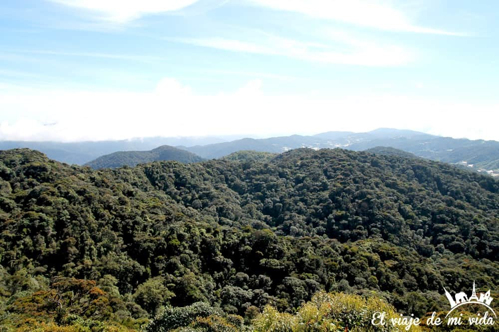 cameron-highlands-mossy-forest-malasia (8)