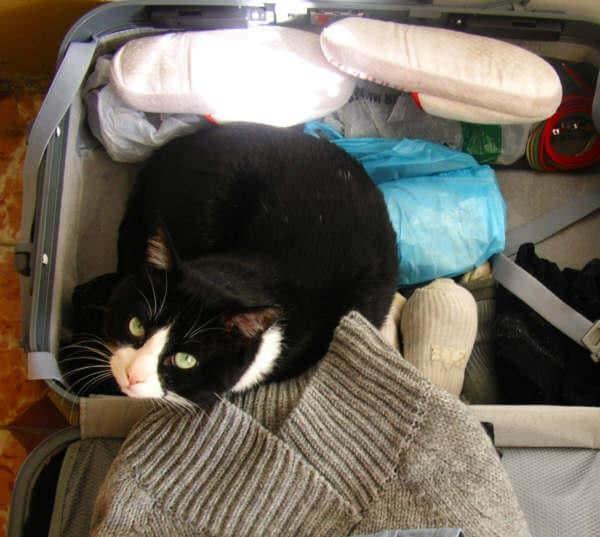 gato-maleta