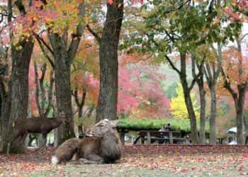 Mi viaje a Nara