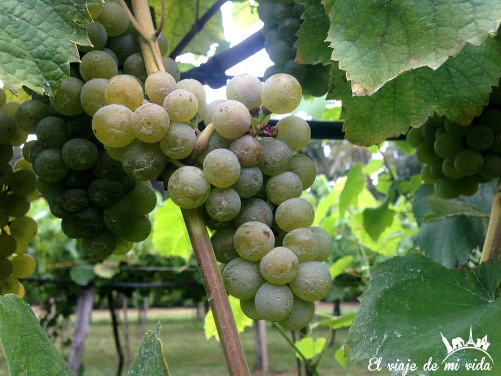 vino-pazo-rubianes-villagarcia-galicia