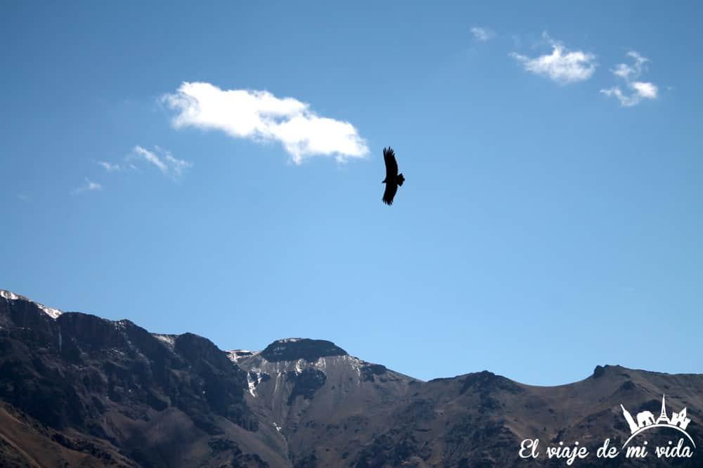 condor-cruz-condor-peru (2)