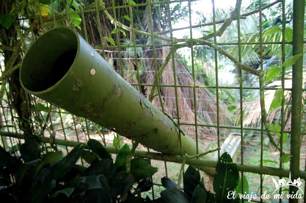 bukit-merah-orangutan-foundation-malasia (4)
