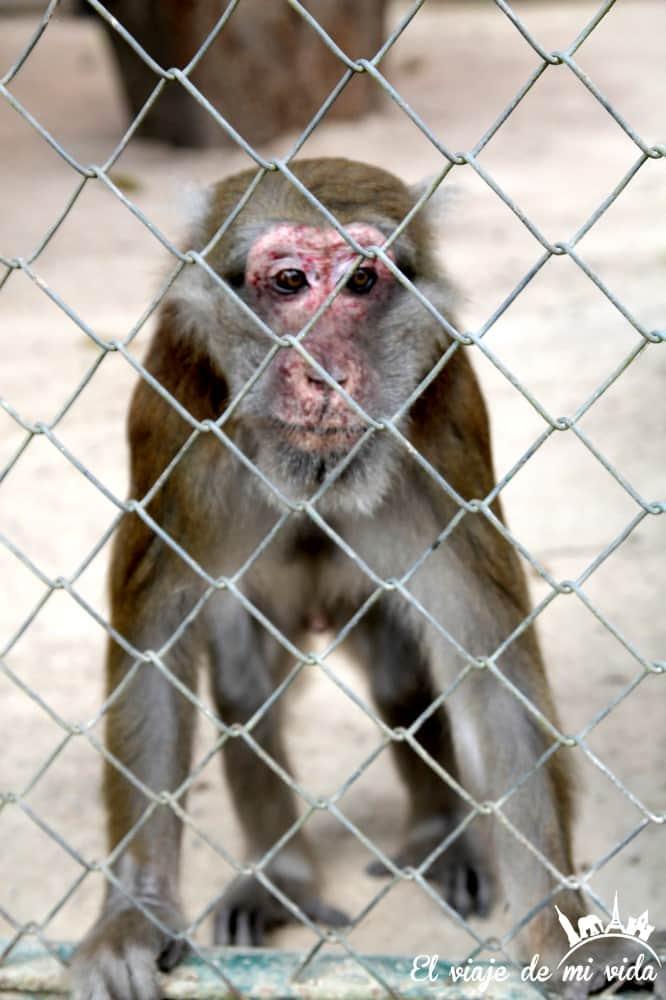 maltrato-animal-tailandia