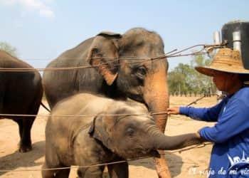 Visita a Wildlife Friends Foundation Thailand
