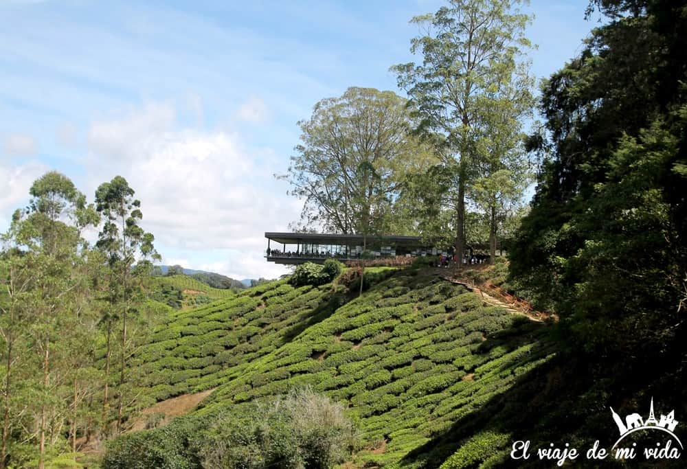 cameron-highlands-malasia (1)