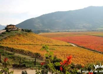 Excursión de un día al Valle de Colchagua